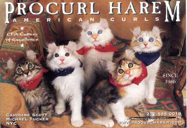 procurl-harem-catcard.jpg